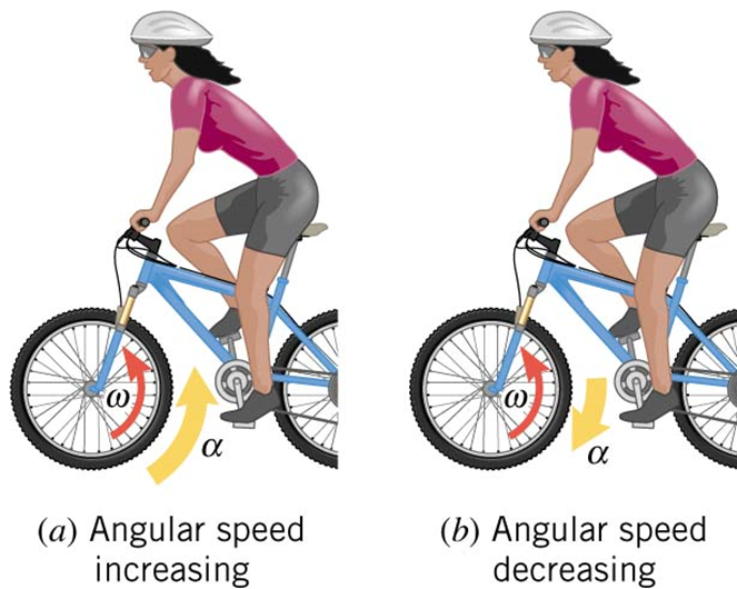 Example 5. A rider on a mountain bike is traveling to the left. Each wheel has an angular velocity of +21.