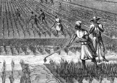 The slaves would work on a plantation picking cotton and tobacco.
