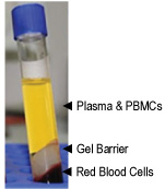 Notes 2. Collect the blood samples by venipuncture using standard blood drawing procedures. Immediately invert the Lithium Heparin tube 8-10 times to ensure complete mixing.