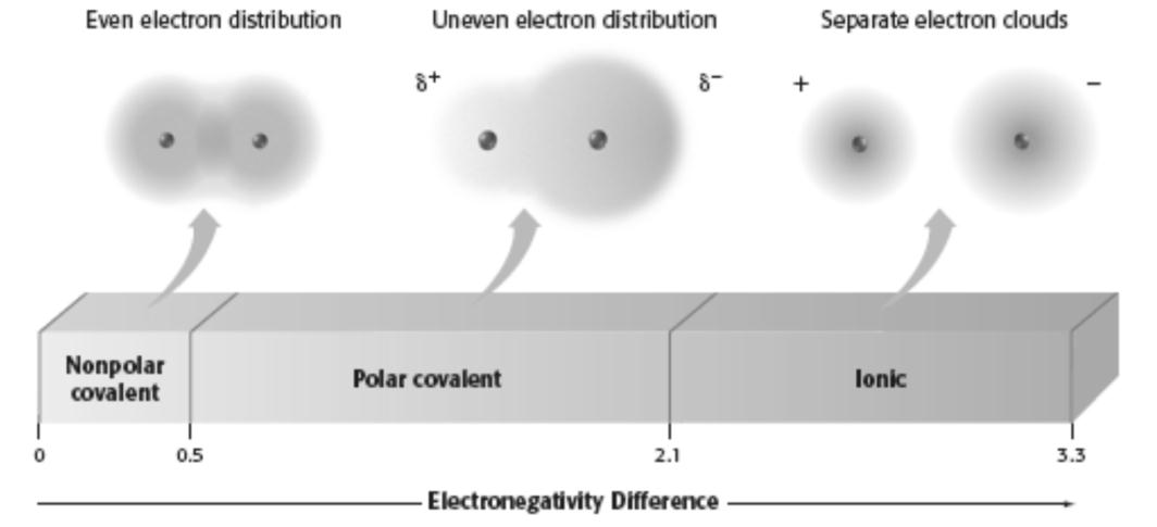 Notice that the larger the difference between the electronegativities, the the bond. Also notice the polar covalent electron cloud picture.