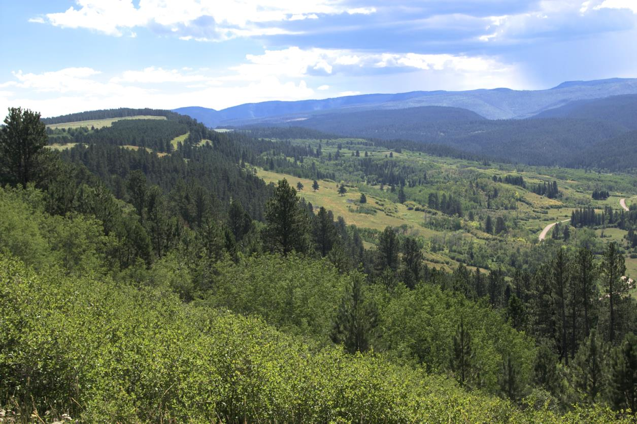 Wildlife and Habitat: This Bold J Ranch has a wide variety of wildlife. The ranch s habitat is ideal for Elk, Whitetail Deer, Mule Deer, Turkey, Mountain Lion, Black Bear, and some Moose.