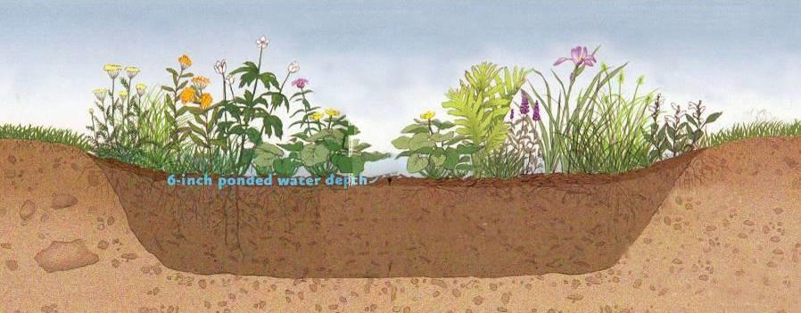 Rain Gardens (Key detain water and infiltrate) - Shallow (6 to 9 max.