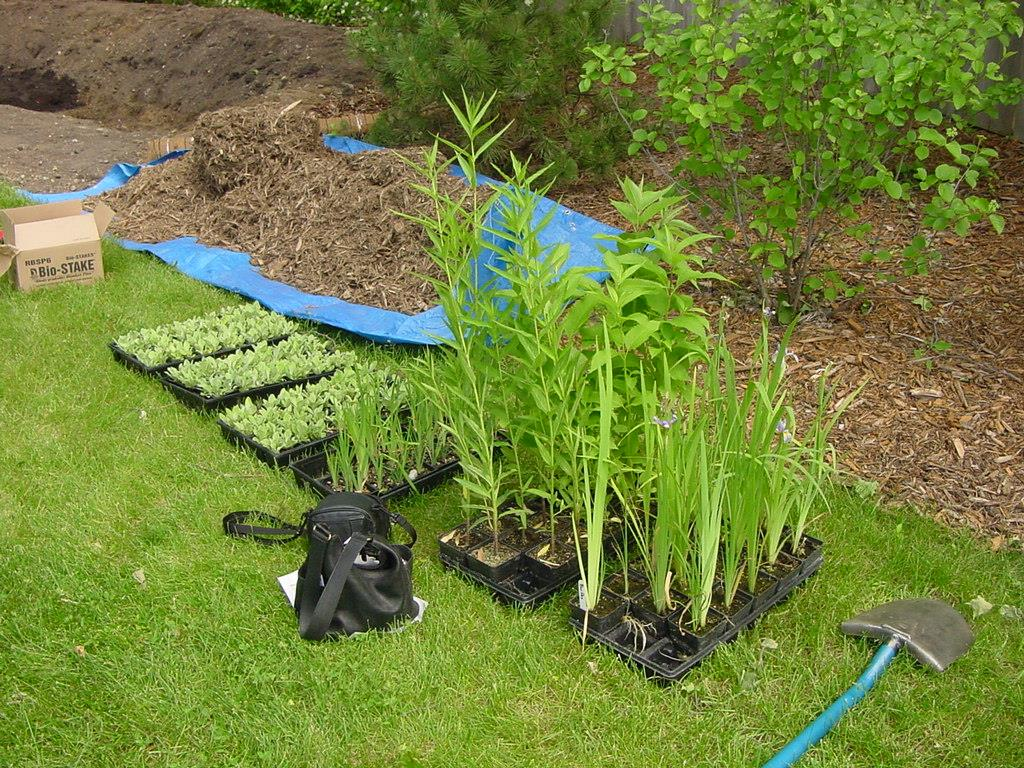 Native Plants Right Plant for the Right