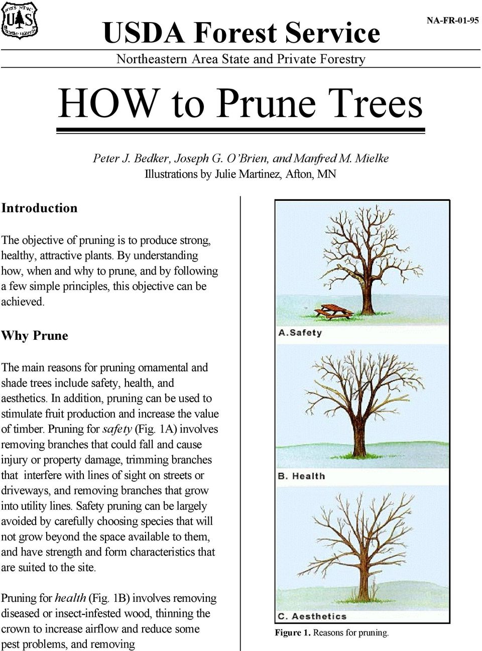 By understanding how, when and why to prune, and by following a few simple principles, this objective can be achieved.
