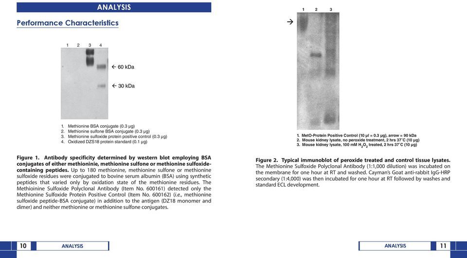Antibody specificity determined by western blot employing BSA conjugates of either methioninie, methionine sulfone or methionine sulfoxidecontaining peptides.