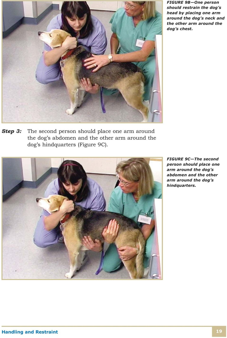 Step 3: The second person should place one arm around the dog s abdomen and the other arm around the