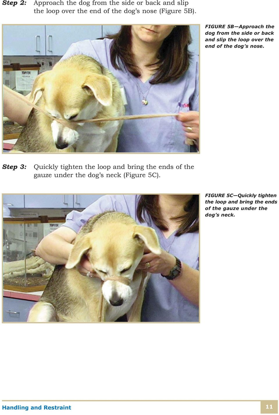 Step 3: Quickly tighten the loop and bring the ends of the gauze under the dog s neck (Figure 5C).