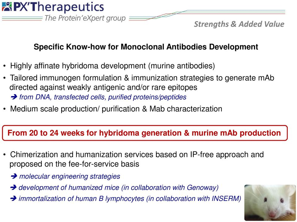 purification & Mab characterization From 20 to 24 weeks for hybridoma generation & murine mab production Chimerization and humanization services based on IP-free approach and