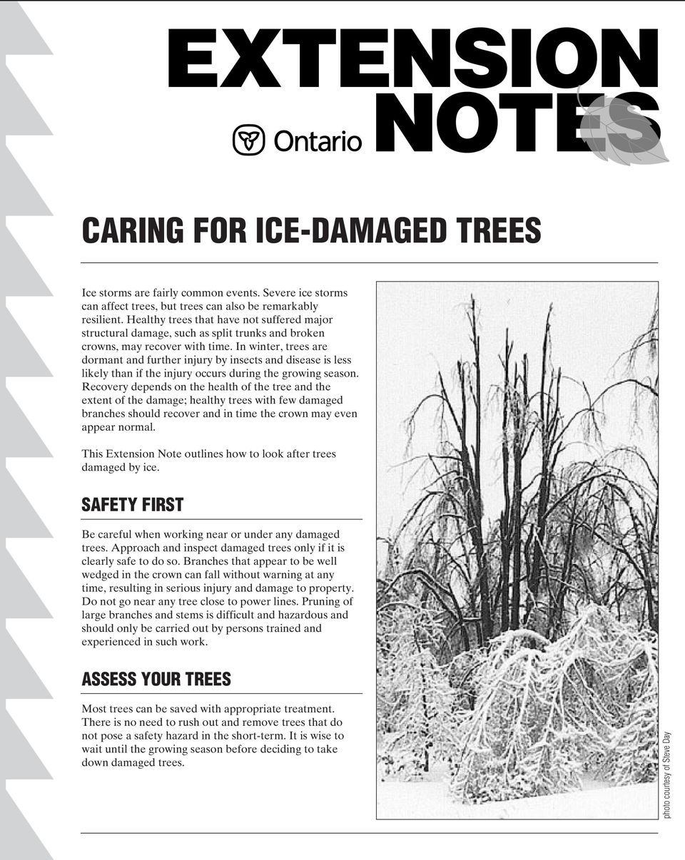 In winter, trees are dormant and further injury by insects and disease is less likely than if the injury occurs during the growing season.