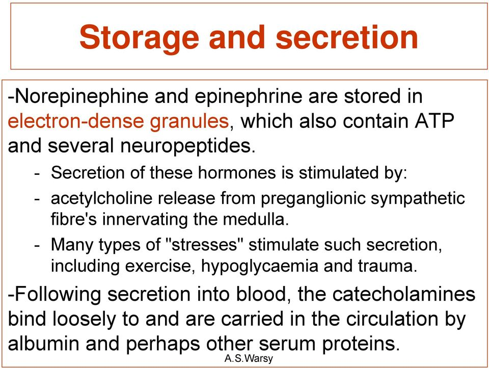 - Secretion of these hormones is stimulated by: - acetylcholine release from preganglionic sympathetic fibre's innervating the