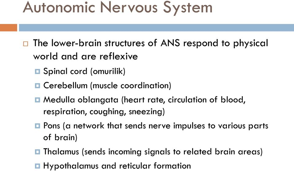 circulation of blood, respiration, coughing, sneezing) Pons (a network that sends nerve impulses to