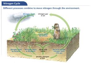 12.2 Matter cycles through ecosystems. Water, carbon, and nitrogen are materials that are necessary for life. They move through ecosystems in continuous cycles.
