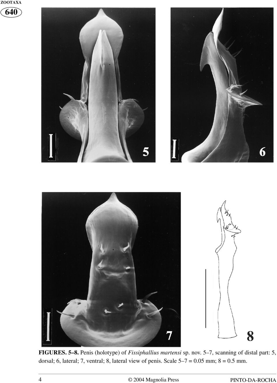 5 7, scanning of distal part: 5, dorsal; 6, lateral; 7,