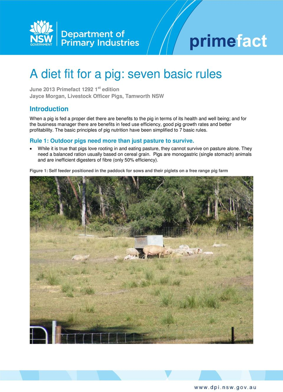 The basic principles of pig nutrition have been simplified to 7 basic rules. Rule 1: Outdoor pigs need more than just pasture to survive.