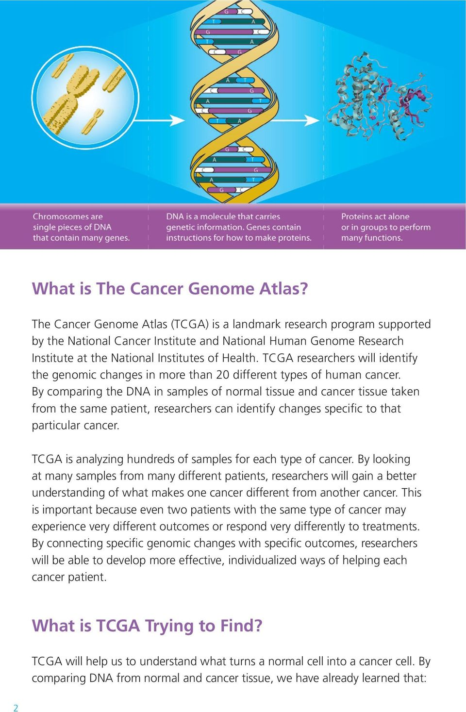 TCGA researchers will identify the genomic changes in more than 20 different types of human cancer.