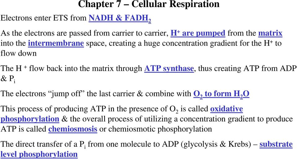 carrier & combine with O 2 to form H 2 O This process of producing ATP in the presence of O 2 is called oxidative phosphorylation & the overall process of utilizing a