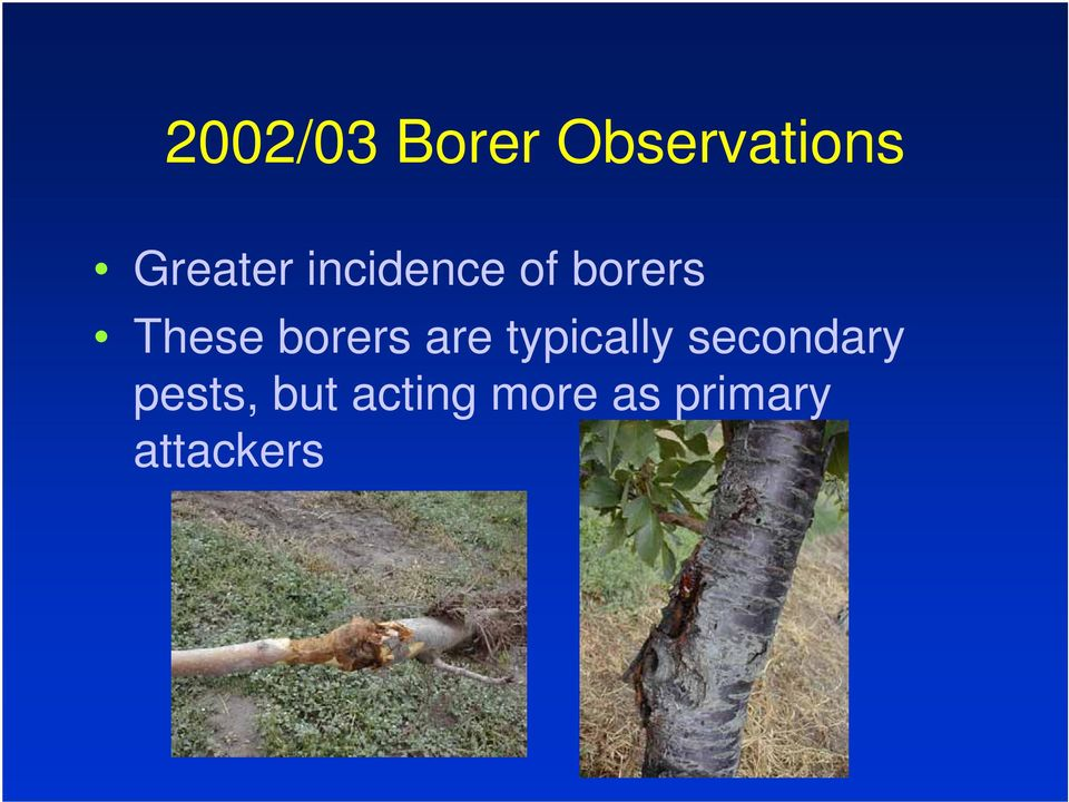 borers are typically secondary