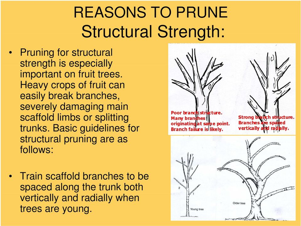 splitting trunks.