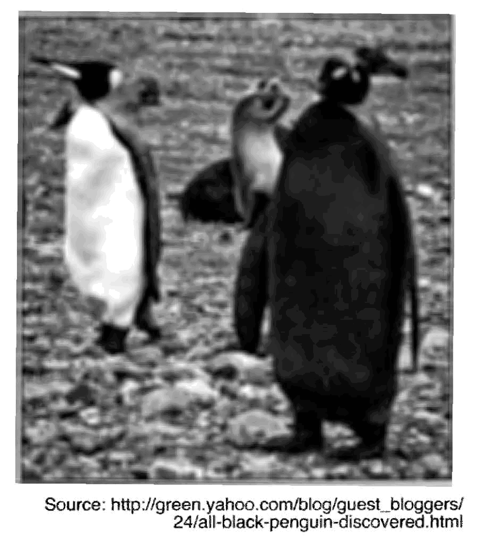 45. Base your answer to the following question on the diagram below. 48. The photograph below shows two penguins of the same species displaying different feather color patterns.