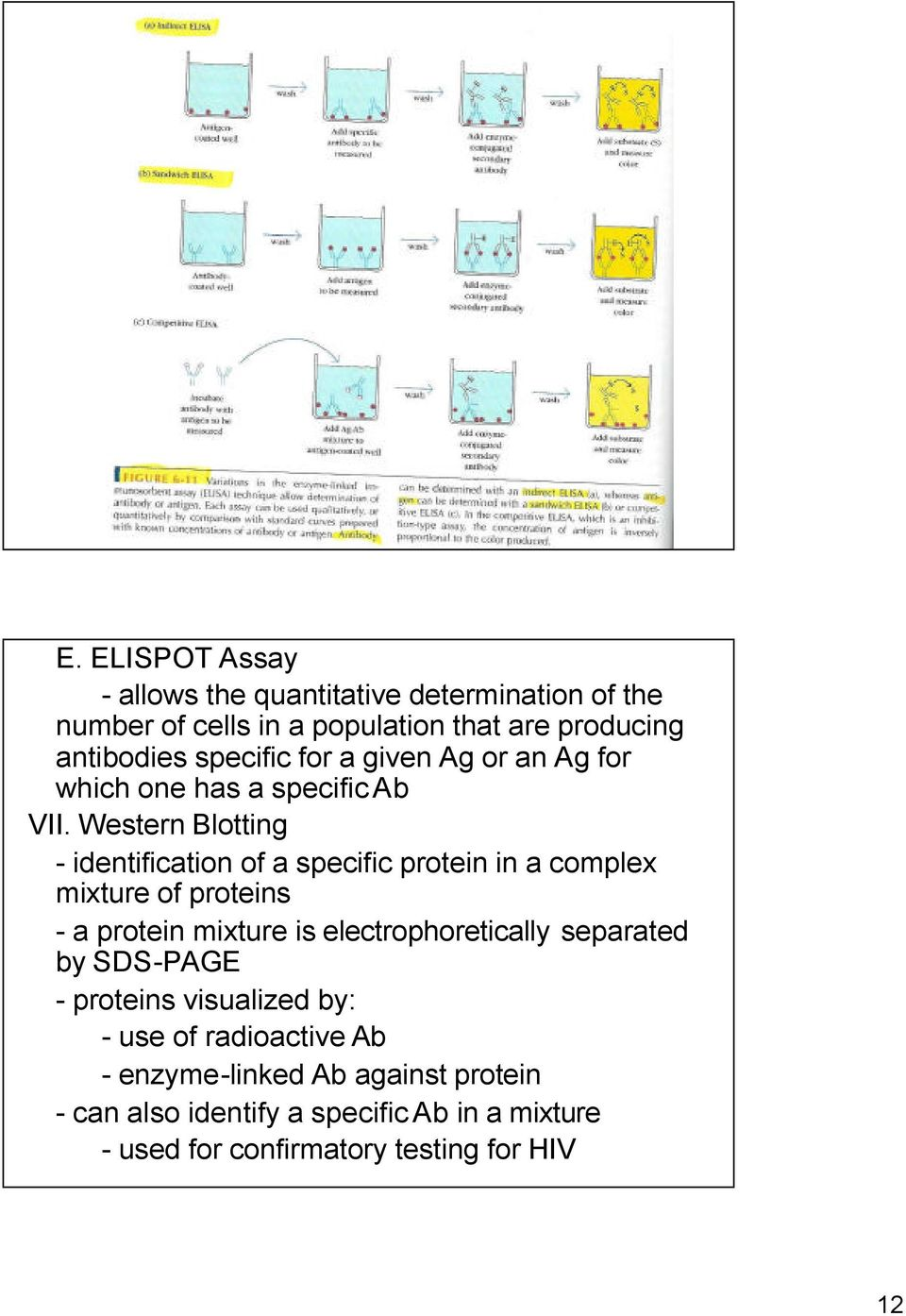 Western Blotting - identification of a specific protein in a complex mixture of proteins - a protein mixture is