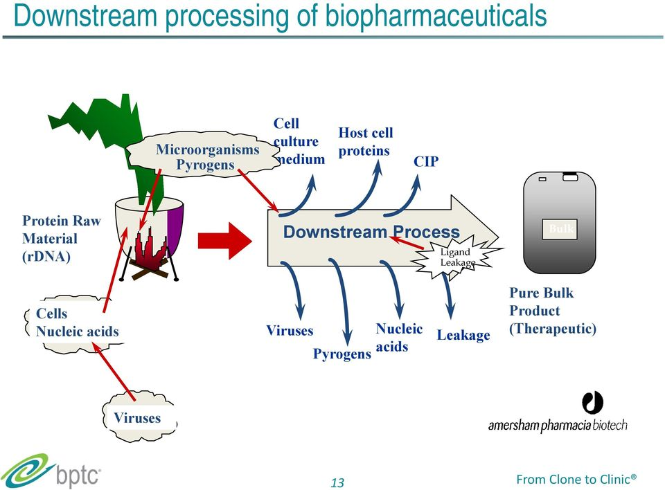Downstream Process Ligand Leakage Bulk Cells Nucleic acids Viruses