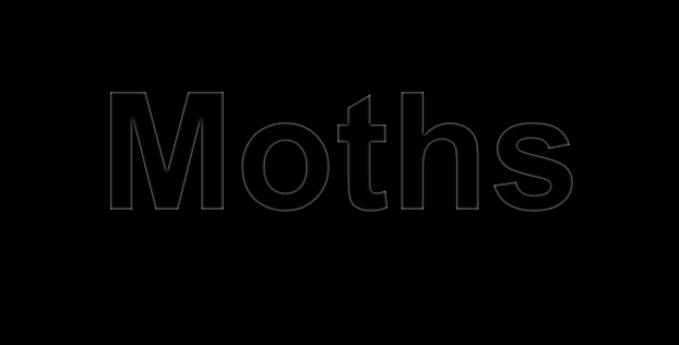 Moths Moth have a good sense of smell & pollinate