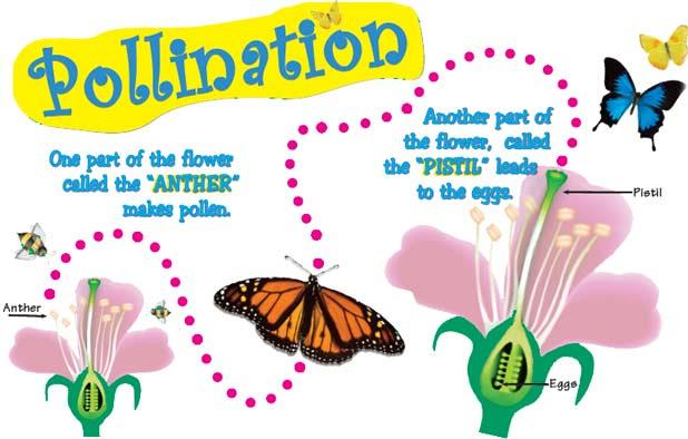 Why is Pollination important? Pollination is how plants reproduce and continue to exist.