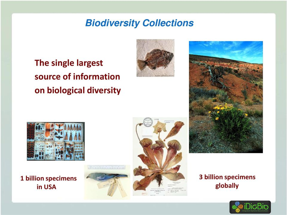 biological diversity 1 billion