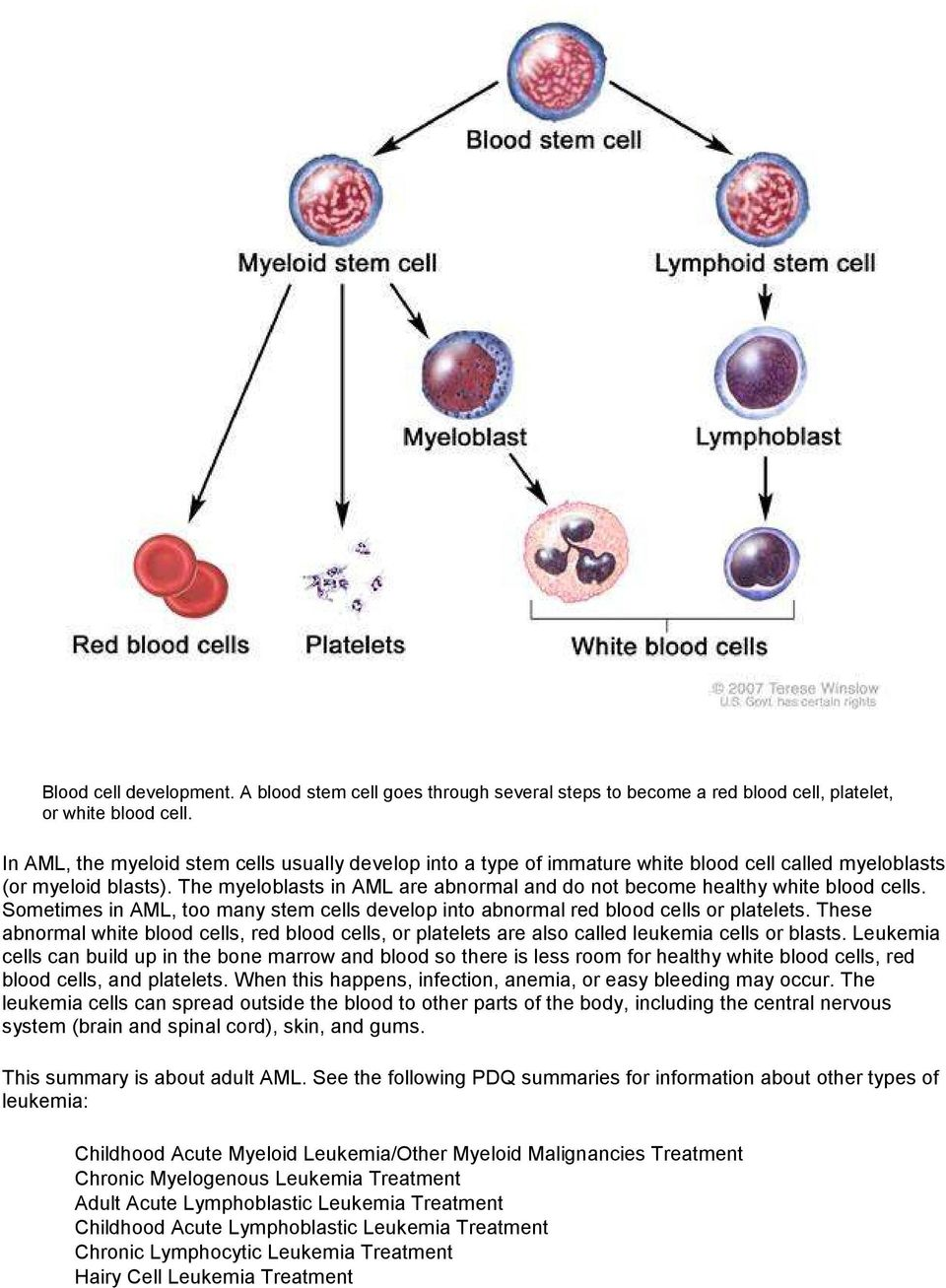 The myeloblasts in AML are abnormal and do not become healthy white blood cells. Sometimes in AML, too many stem cells develop into abnormal red blood cells or platelets.