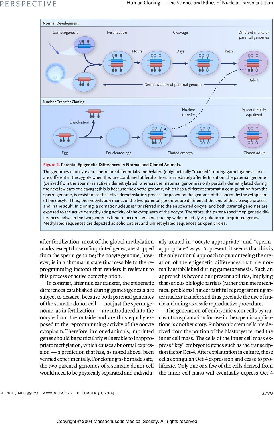 The genomes of oocyte and sperm are differentially methylated (epigenetically marked ) during gametogenesis and are different in the zygote when they are combined at fertilization.