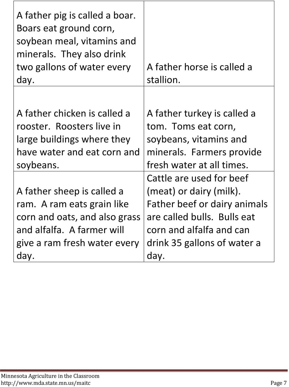 A ram eats grain like corn and oats, and also grass and alfalfa. A farmer will give a ram fresh water every day. A father turkey is called a tom.