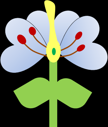 Questions 1) Label the plant using the words in the box Stamen Style Leaf Ovule Stigma