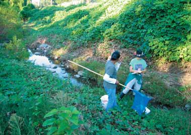 Evaluate your stream buffer (cont.). Describe the stream buffer. For example, is it mostly forested, bare soil, pasture, or mown grass?