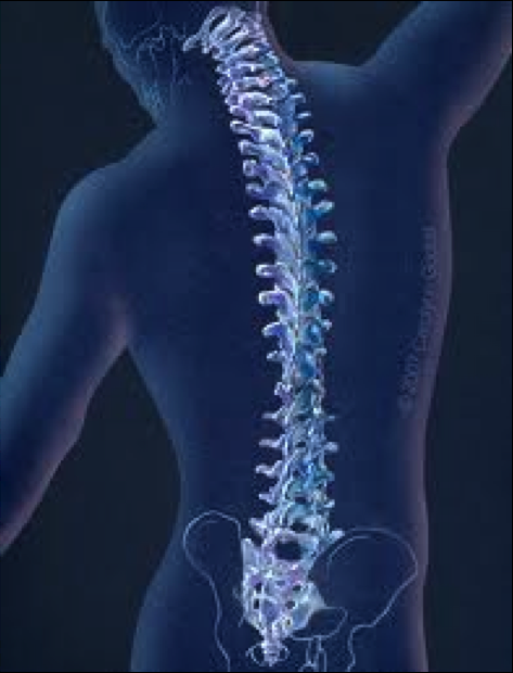 Getting Ready for Spine Surgery Table of Contents Preparing for Surgery Your