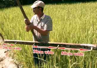 Taking the above 4 differences into account, the SRI method is described below 1 As in the traditional paddy rice cultivation, first sow the seeds in a nursery, but sowing more thinly makes it easier