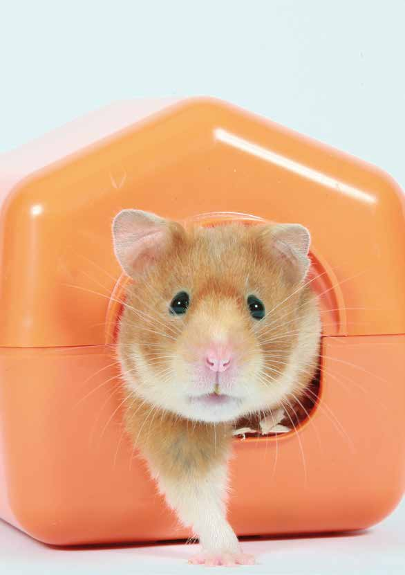 SMALL PETS 5 Caring for your hamsters The charity