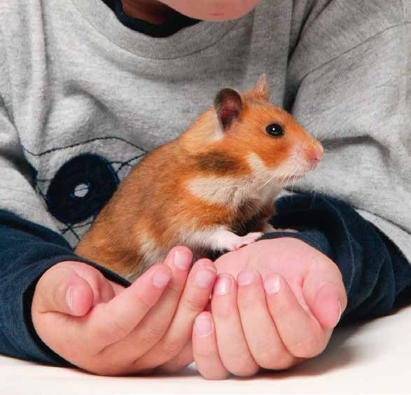 Caring for your hamsters Hamsters are the best known and one of the most popular