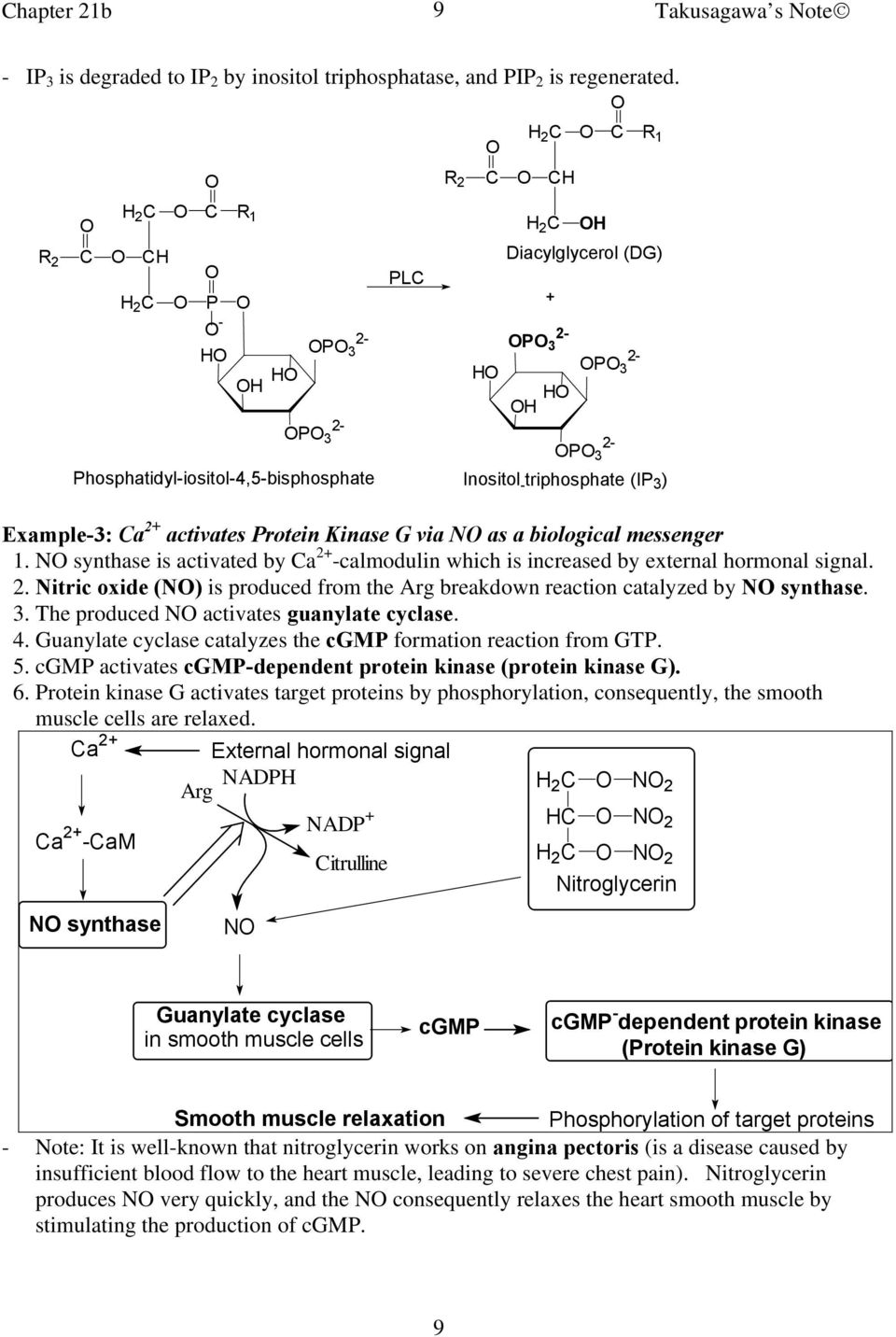 activates Protein Kinase G via N as a biological messenger 1. N synthase is activated by a 2+ -calmodulin which is increased by external hormonal signal. 2. Nitric oxide (N) is produced from the Arg breakdown reaction catalyzed by N synthase.