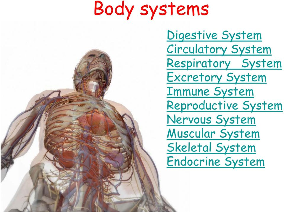 Immune System Reproductive System Nervous