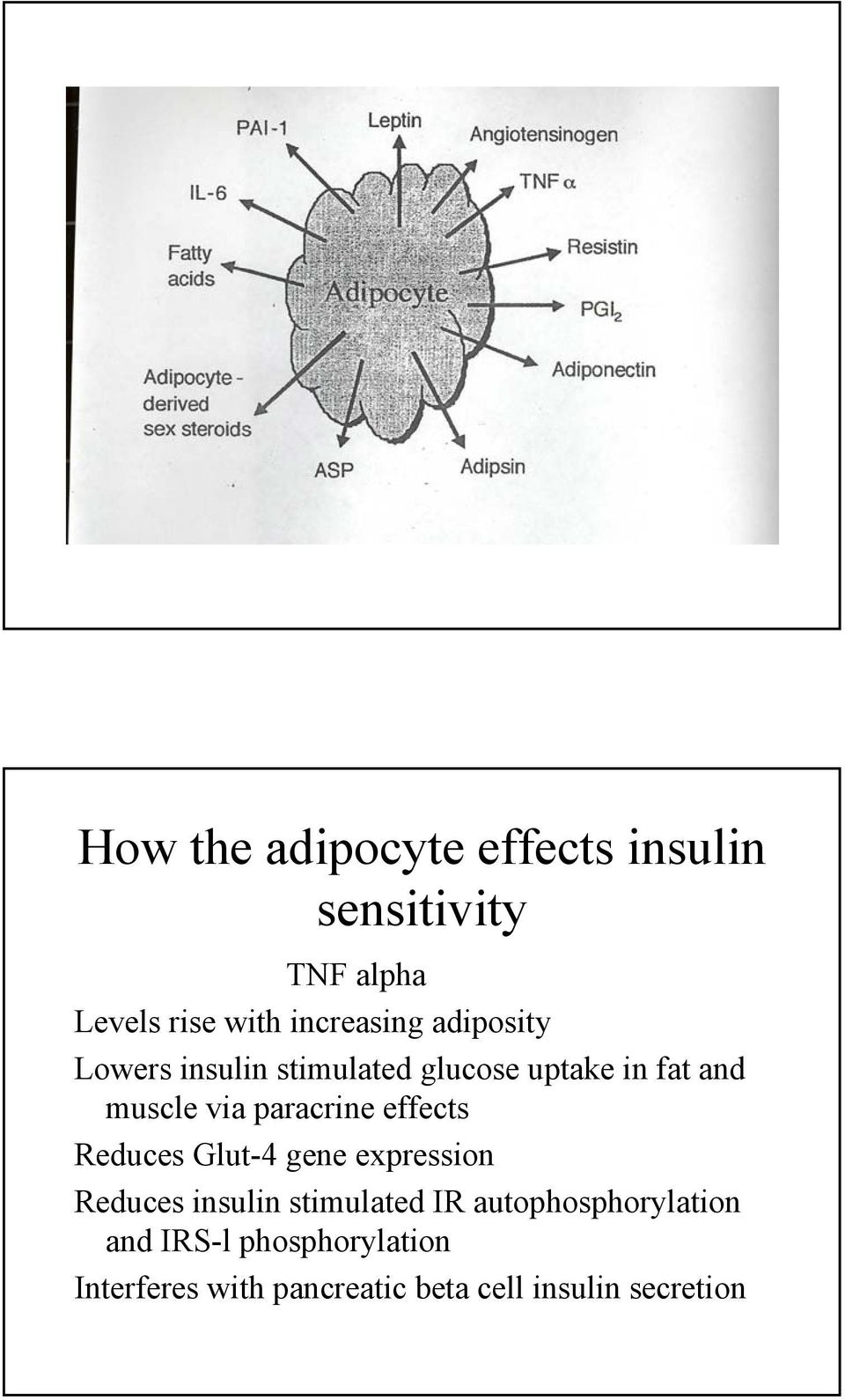 effects Reduces Glut-4 gene expression Reduces insulin stimulated IR