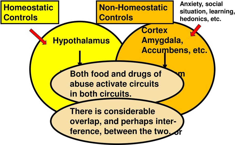 Brainstem Both food and drugs Brainstem of abuse activate circuits in both
