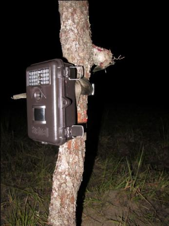 Camera traps Camera traps is a technology that facilitates the detection and capture of the movement of animals in wildlife.