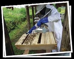 Page 7 Issue 15 Is it bee-killing, bee-having or bee-keeping? (cont d) Beehives commonly used can be any as it is the methodology used rather than the hive itself that defines the practise.