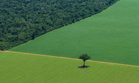 Brazil issues: Beyond the Criticism of Deforestation M.Sc.