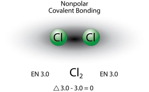 A nonpolar covalent bond is one in which the shared electrons are distributed equally between the two atoms.