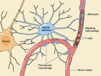 How Does HIV Affect the Nervous System?