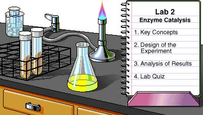 diffusion and osmosis through dialysis tubing essay Write assignment for me label 4 lengths of dialysis tubing lab #7 osmosis in onion cells both diffusion and osmosis do not require energy.