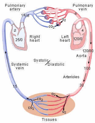 what is respiratory system pdf