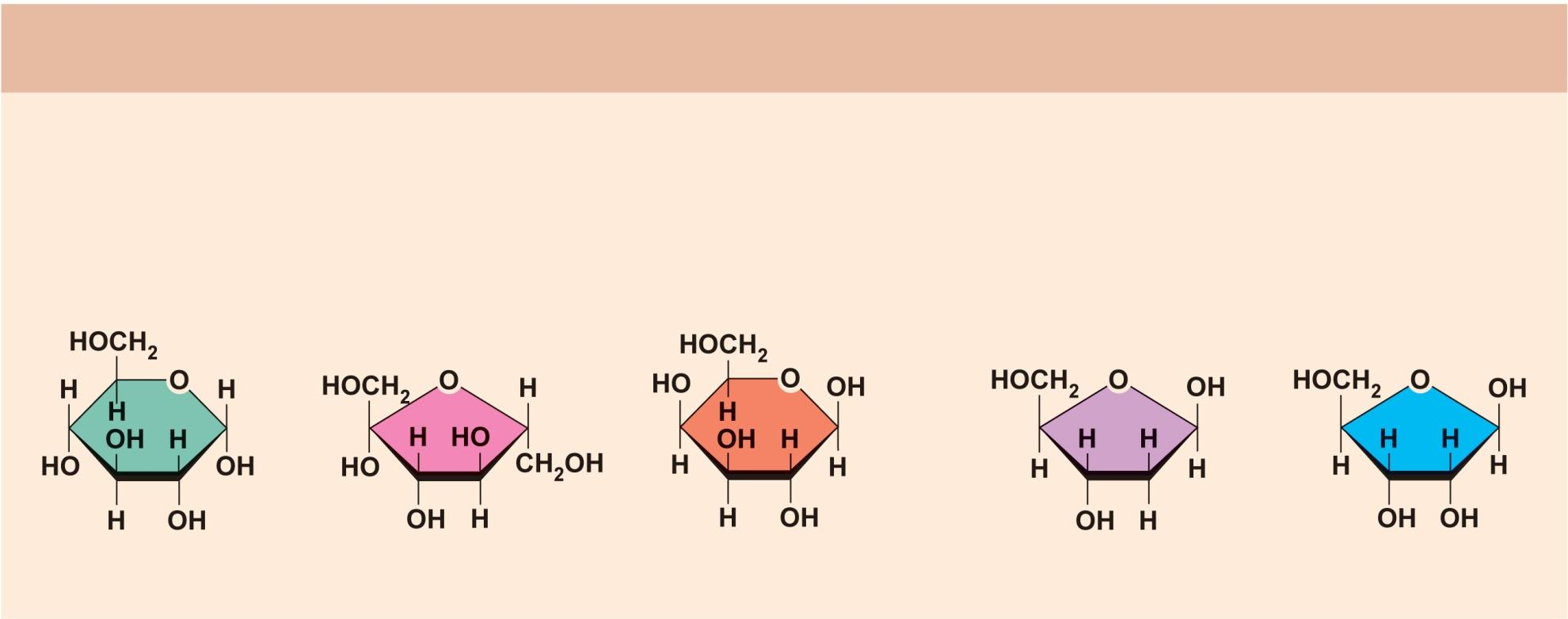 Example Hexose sugars (the hexoses shown here are isomers) (a) Monosaccharides Monomers of