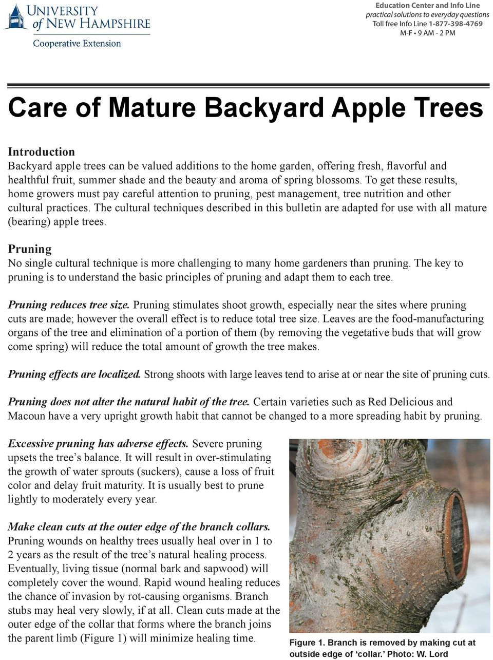 To get these results, home growers must pay careful attention to pruning, pest management, tree nutrition and other cultural practices.